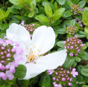 manriスタッフの休日 桜