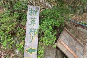 しいたけ狩り 兵庫県三田市 かさや