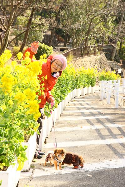 菜の花と母