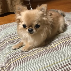 愛犬のくぅちゃんとのんびりお正月をすごしました。