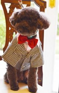 結婚式 結婚式場 犬と一緒 愛犬と一緒 演出