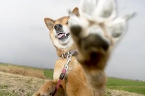 愛犬と一緒の結婚式♪ (1)
