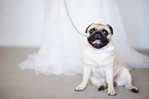 愛犬と一緒の結婚式♪ (5)