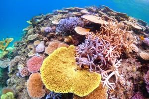海 マリンスポーツ ダイビング 魚 サンゴ