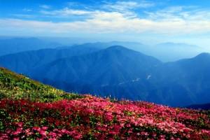 伊吹山の山頂!絶景ポイントのお花畑