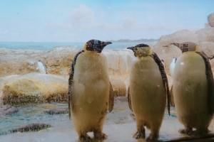 南紀白浜 アドベンチャーワールド マリンワールド 北極 動物 ペンギン 触れ合い
