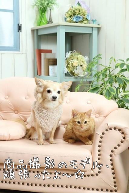 犬猫モデル