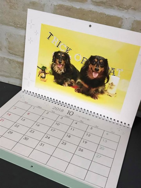 ダックスカレンダー