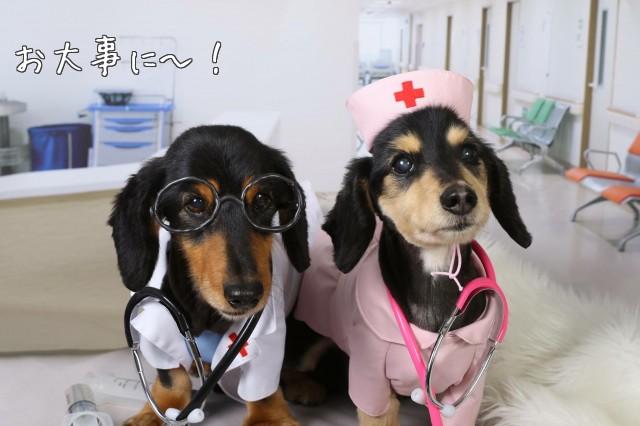ダックス医師&看護婦さん