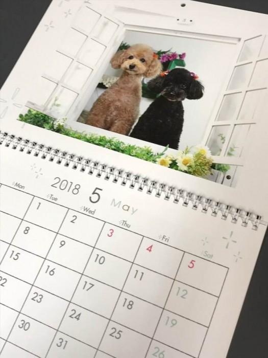 1ヶ月めくりカレンダー プードル