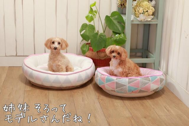 ベッドモデル