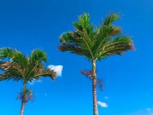 令和元年3回目の沖縄旅行!11月の沖縄は過ごしやすくオススメ