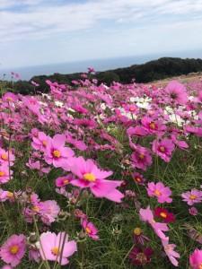 淡路島といえば花さじき