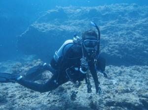 たくさんの魚を見ることができる白浜ダイビング