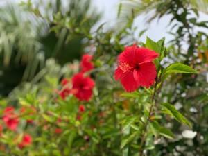 沖縄の結婚式「にーびち」についてご紹介
