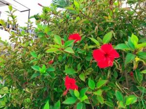 南国で心温まる旅!絶景を楽しめる沖縄のオススメスポットご紹介