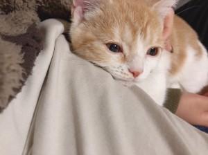 友人が猫を飼い始めました♪